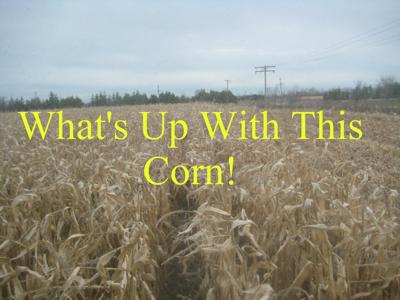 Corn2009400
