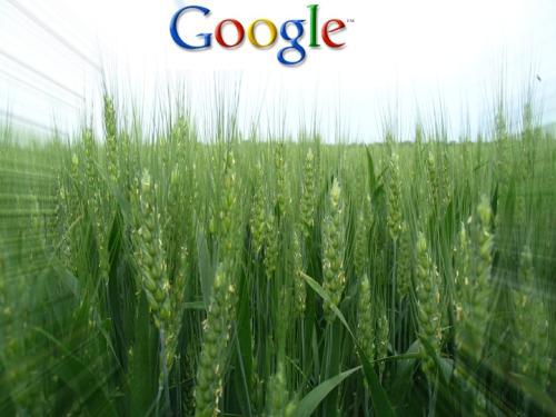 Google Crop 500
