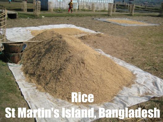 Rice St. Martin's