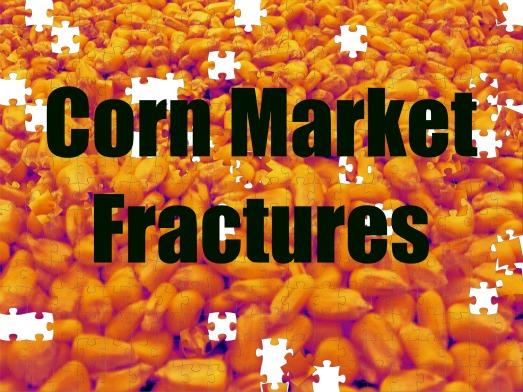 Corn Market Fractures