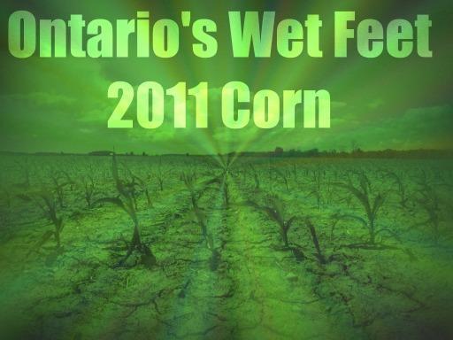 Ontario's Wet Feet