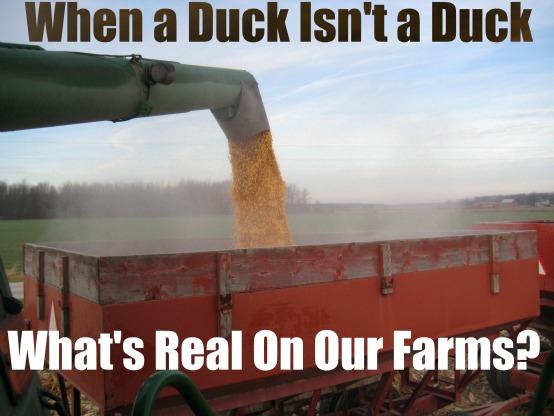 Duck Isn't a Duck