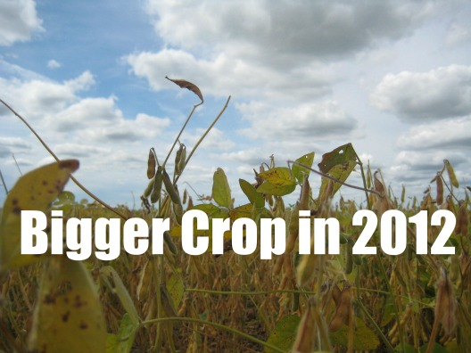 Bigger Crop 2012
