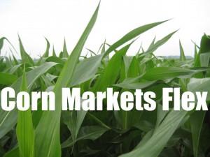Corn Flex