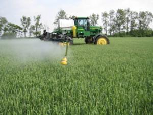 Wheat Fus 510