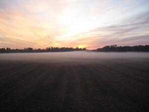 Farm-Land4