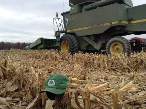 Corn Hat 510