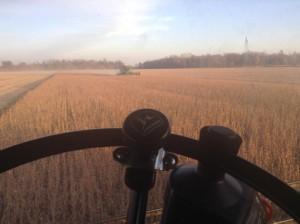 Grains fall 510