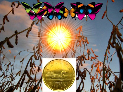 Loonie Starburst Butterfly 510