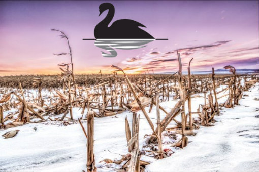 Black Swan US Agriculture